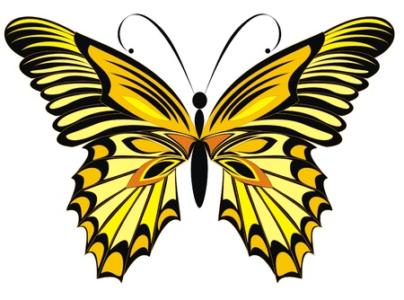 Vector butterfly isolated on a white background  Illustration