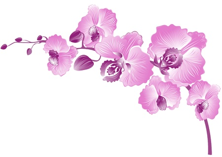 Elegance branch of purple orchids. Vector illustration
