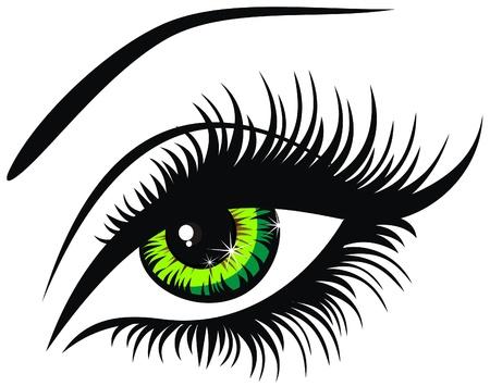 ojos hermosos: Ilustración vectorial hermoso ojo verde femenino Vectores