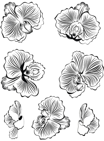 white orchids: Set of black flower orchids design elements  Illustration