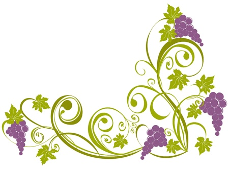 grapevine: Grapevine isolated on a white. Wine design elements