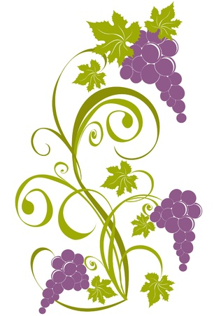 Grapevine isolated on a white. Wine design elements Stock Vector - 17474732