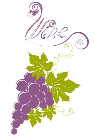 Grapevine isolated on a white. Wine design elements Stock Vector - 17474731