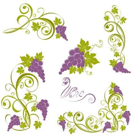 vines: Grapevine isolated on a white. Wine design elements