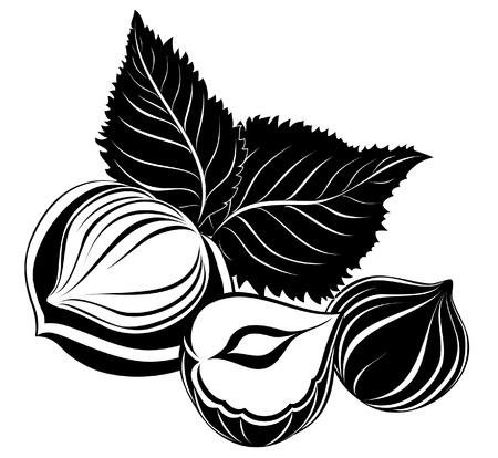 hazelnut: Hazelnuts with leaves