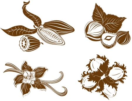 Collection of dessert ingredients. Hazelnuts, Cocoa beans, Vanilla pods isolated on white  Illustration