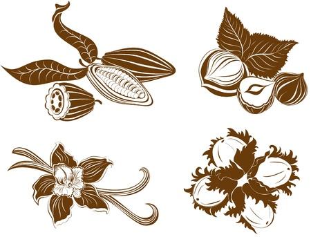 hazelnut: Collection of dessert ingredients. Hazelnuts, Cocoa beans, Vanilla pods isolated on white  Illustration