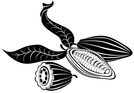Vector illustration cocoa beans