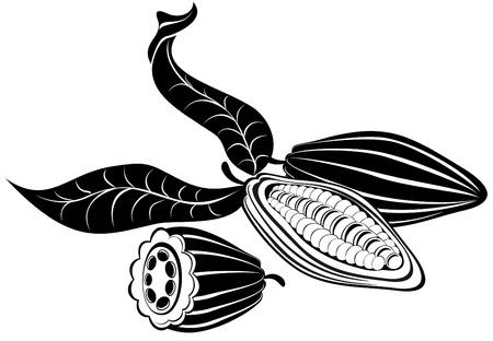 pod: Vector illustration cocoa beans