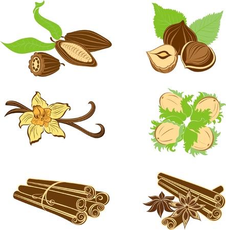 flor de vainilla: Colecci�n de ingredientes de postre. Las avellanas, cacao en grano, vainas de vainilla, an�s y canela aislados en blanco Vectores