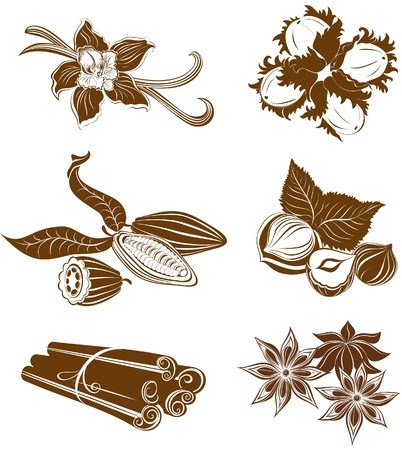 anise: Collection of dessert ingredients. Hazelnuts, Cocoa beans, Vanilla pods, Anise, and Cinnamon isolated on white  Illustration
