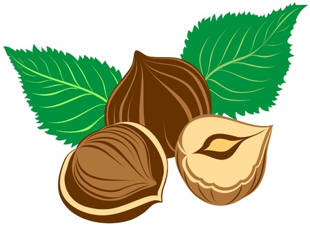 Hazelnuts with leaves Stock Vector - 17642445