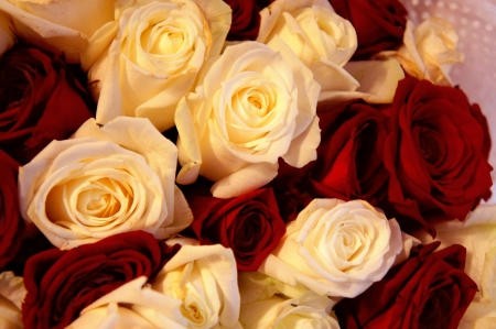 romance image: Bed of red and white Roses Stock Photo