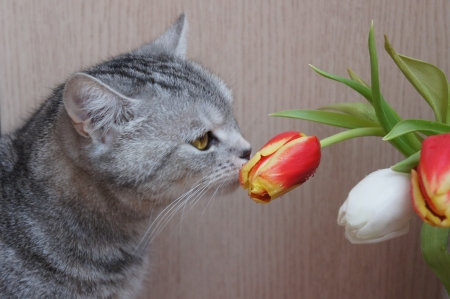 Cat and flowers Stock Photo - 18963004