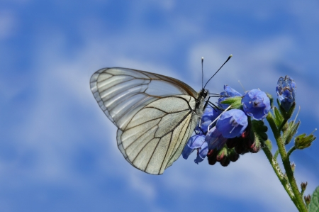 mariposa azul: Mariposa en el fondo del cielo azul