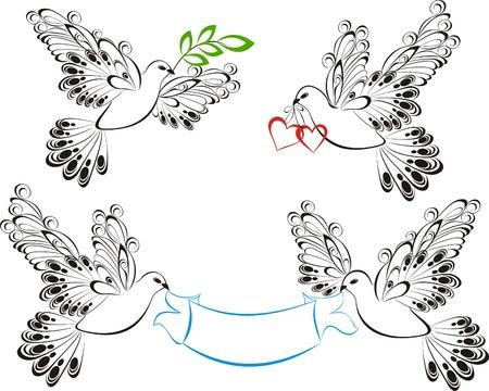 paloma caricatura: Dove Vector