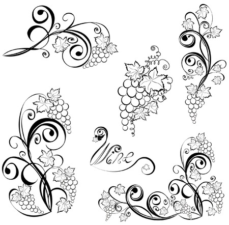 grapes wine: Grapevine. Wine black and white design elements.
