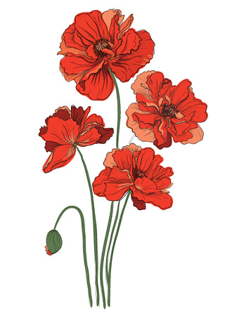 Red poppies isolated on a white background Vector