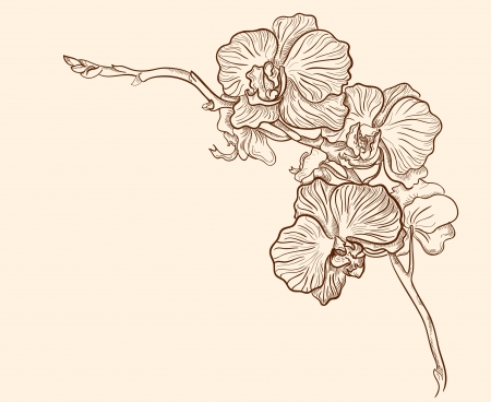 Orchid flower hand drawn vector