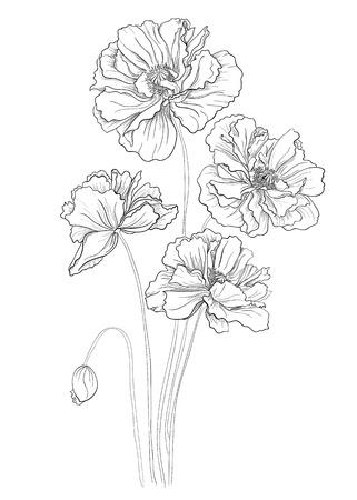 Mano dibuja flores amapolas Foto de archivo - 23350278