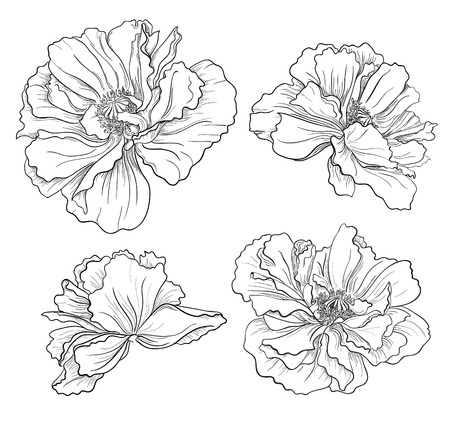 ramos de flores: Mano dibuja flores amapolas Vectores
