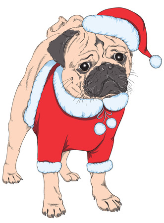 pug puppy: Pug puppy in a Santa Claus hat, isolated on white  Merry Christmas and Happy New Year vector card Illustration