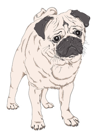 pug puppy: Pug puppy dog Illustration