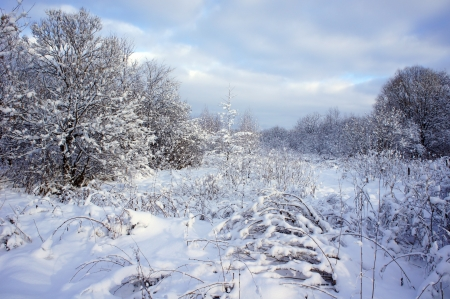 sleet: Beautiful winter landscape with snow covered trees Stock Photo