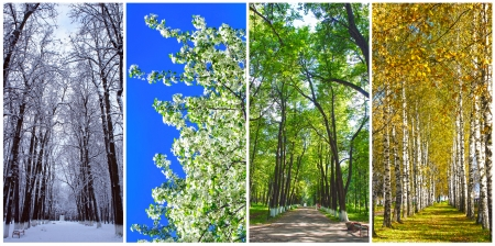 Four seasons collage: Winter, Spring, Summer, Autumn Stock Photo