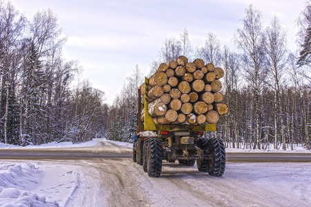 Transportation of logs on a truck on a forest road in winter photo