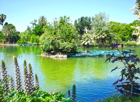 Tropical garden, lake and palms tree   photo