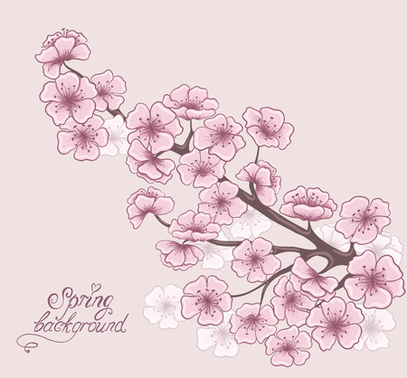 Cherry branch in blossom. Decorative spring floral background. Hand drawing Vector illustration.