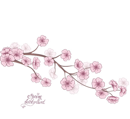 Cherry branch in blossom isolated on a white. Decorative spring floral background. Hand drawing Vector illustration.