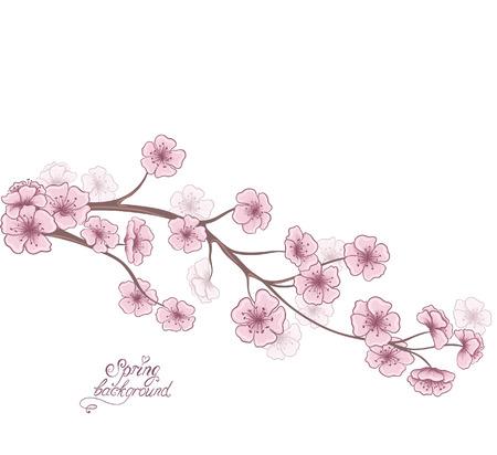 Kirschzweig in der Blüte auf einem weißen. Dekorative Frühjahr floralen Hintergrund. Handzeichnung Vektor-Illustration. Vektorgrafik