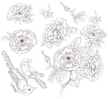 Flower set. Vintage collection of hand drawn roses and birds isolated on white background Vector