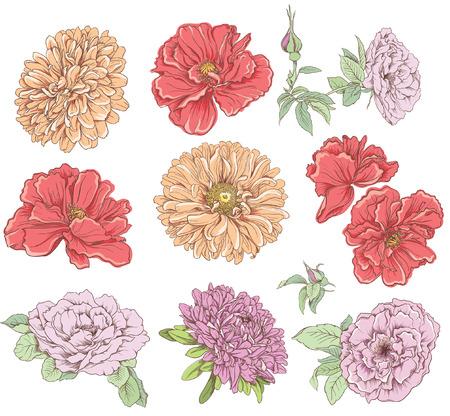 dalia: Conjunto de la mano de la vendimia flor dibujada ilustración vectorial Gran selección de varias flores aisladas sobre fondo blanco