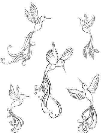 Ensemble de collection colibri Oiseau Croquis de la main d'oiseaux dessinée Vecteurs