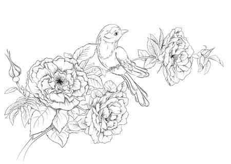 rose blanche: Oiseaux assis sur la floraison des roses de dessin fleurs fond Vecteur de main