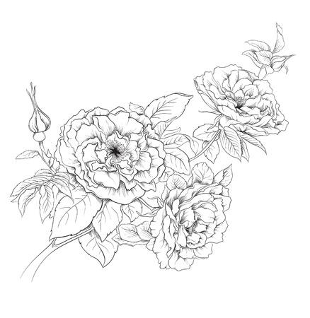 flower art: Disegnata a mano fiori rosa Vettoriali