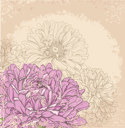 aster: Hand drawn floral background with pink aster flowers