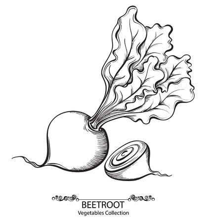 beet: Beet. Vector hand drawn vegetables isolated on white background