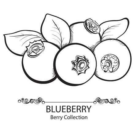 Stylized hand drawn black and white illustration of blueberry Ilustração