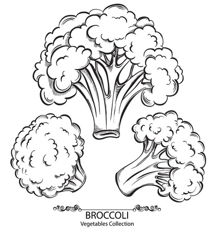 brocoli: Broccoli. Vector hand drawn vegetables isolated on white background