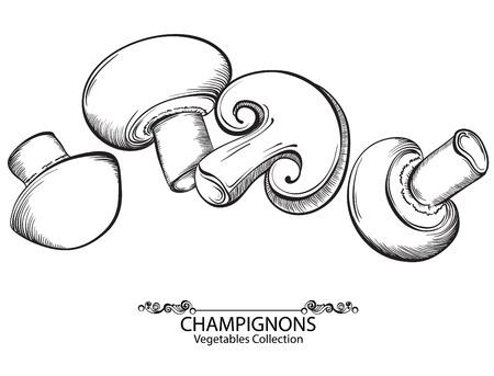 champignon: Mushrooms Champignon. Vector hand drawn vegetables isolated on white background Illustration