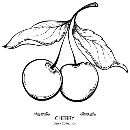 Couple Cherry. Vector illustration of ink hand drawn berry  イラスト・ベクター素材