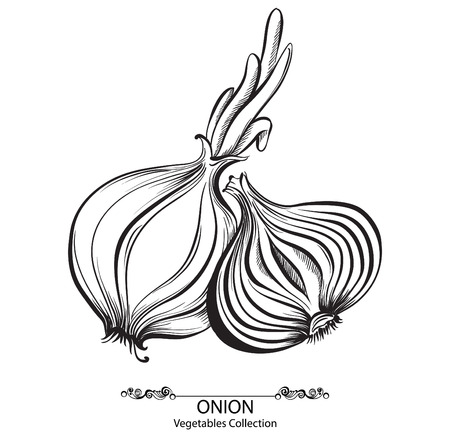 Onion whole and sliced. Vector hand drawn vegetables isolated on white background Illustration