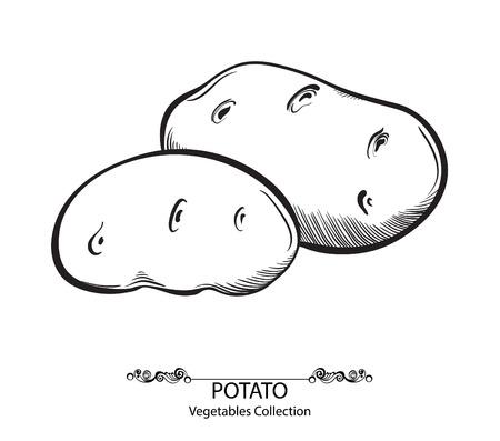ジャガイモ。白い背景上に分離されてベクトル手描き野菜  イラスト・ベクター素材