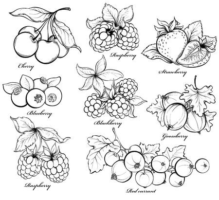 frutilla: Colección de bayas dibujado a mano sobre fondo blanco.