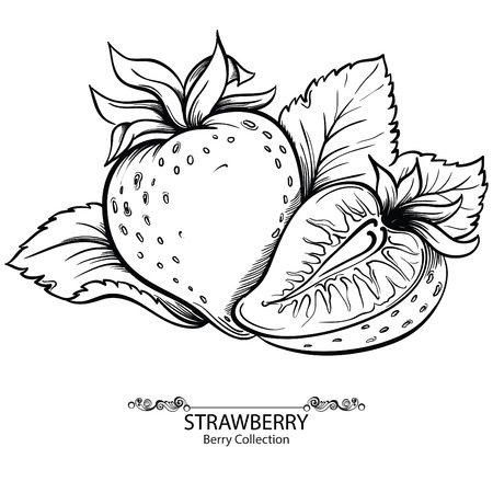 Strawberry. Vector illustration of ink hand drawn berry