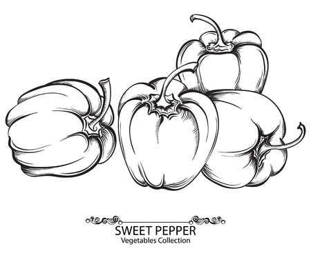 Sweet peppers. Vector hand drawn vegetables isolated on white background